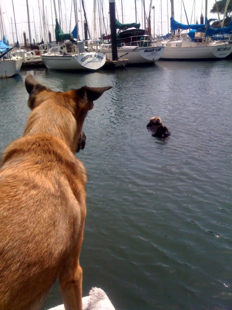 Kona and the Otter
